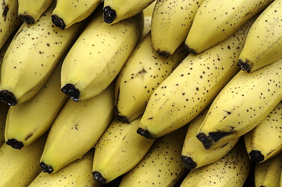 لماذا تهوى القرود آكل الموز ؟