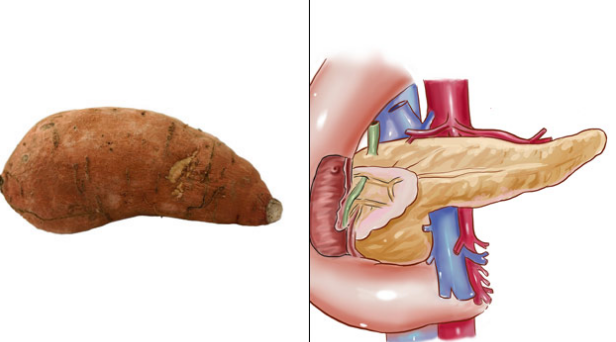 أطعمة تشبه أعضاء من جسم الإنسان البطاطا الحلوة والبنكرياس