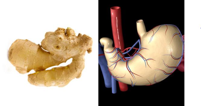 أطعمة تشبه أعضاء من جسم الإنسان الزنجبيل والمعدة