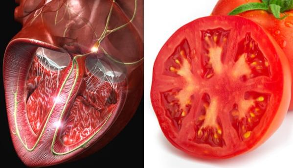 أطعمة تشبه أعضاء من جسم الإنسان الطماطم والقلب