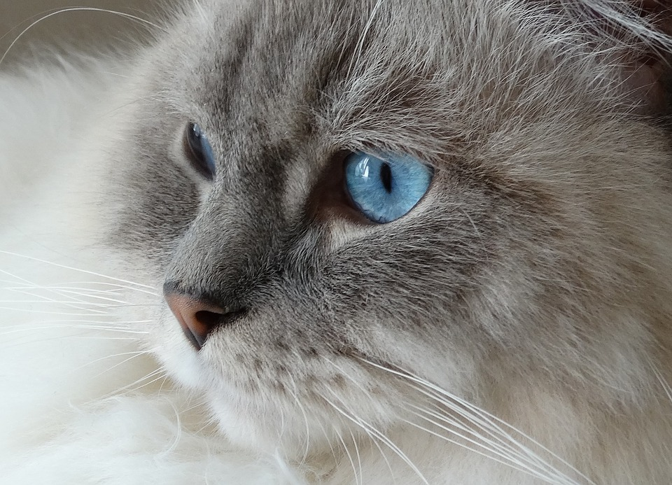 لماذا تلمع عيون القطط في الليل والظلام؟