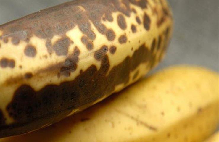 البقع الداكنة في الموز