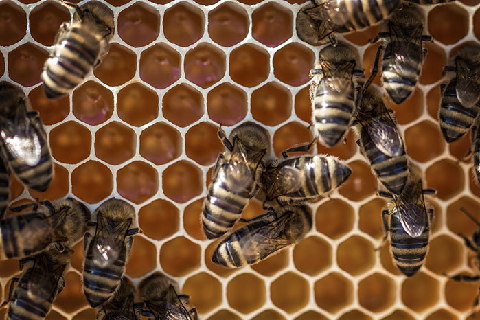 هل تعرف لماذا شكل خلايا النحل سداسي