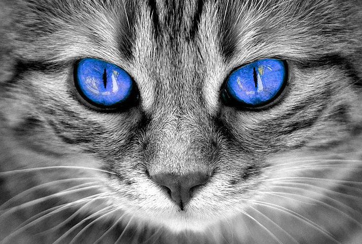 لماذا لا يجب علينا النظر في عيون القطط