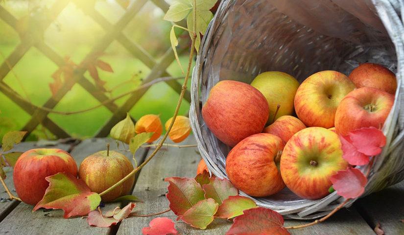 هل التفاح يرفع السكر